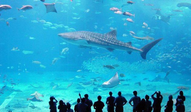 SIN-Aquarium2-800