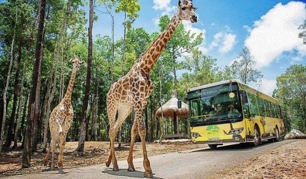vinpearl-safari-phu-quoc-8932